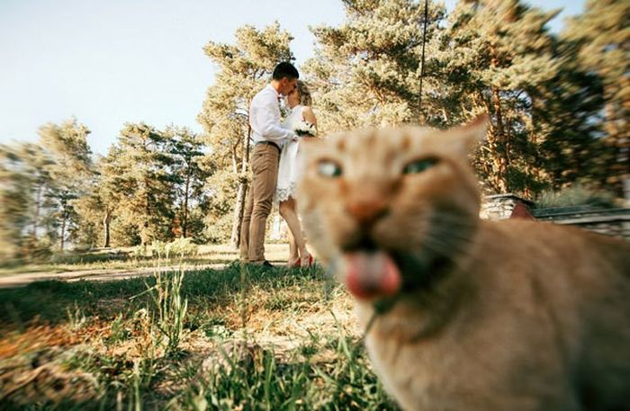 Awesome Pictures Of Cats Being Epic (27 pics)