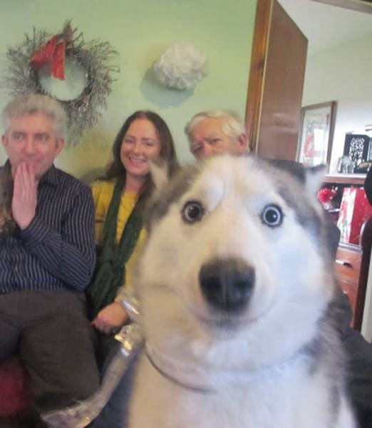 Dogs Are Really Good At Ruining Photos (50 pics)