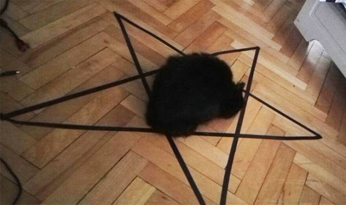 You Will Never Again Say That Cats Are Not Satan's Worshippers (3 pics)