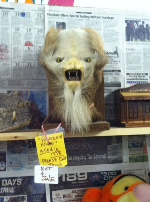 No One Knows Where Thrift Shops Find All This Insane Stuff (47 pics)