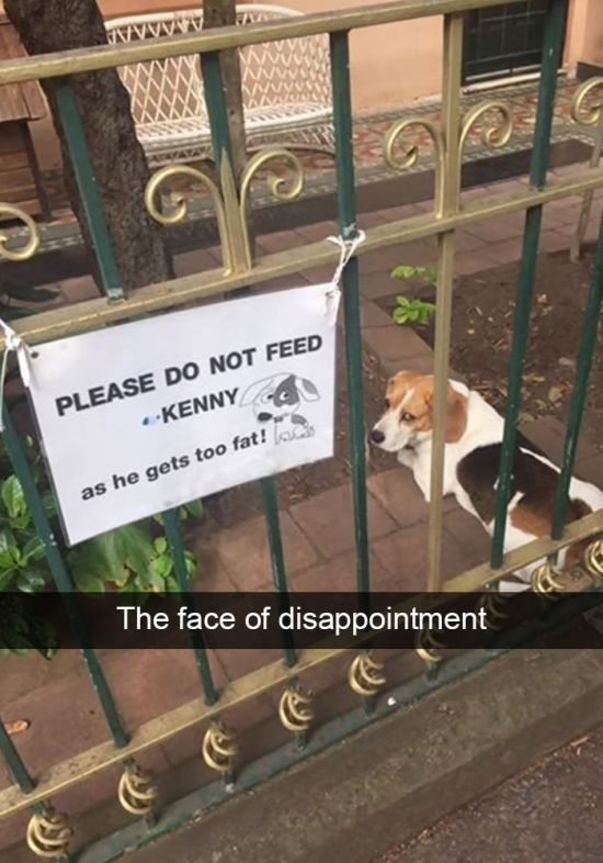 Hilarious Dog Snapchats That Will Keep You Laughing All Week (30 pics)