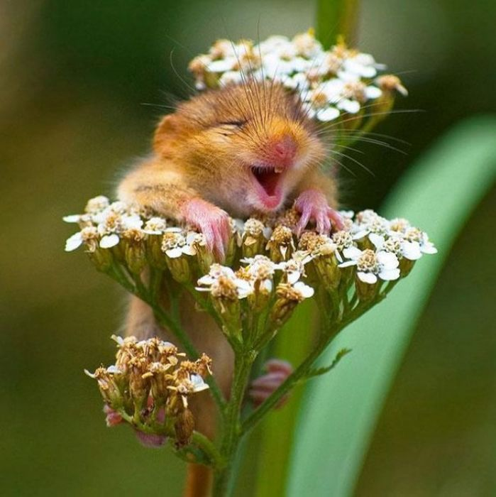 Cute Animals Being Cute (31 pics)