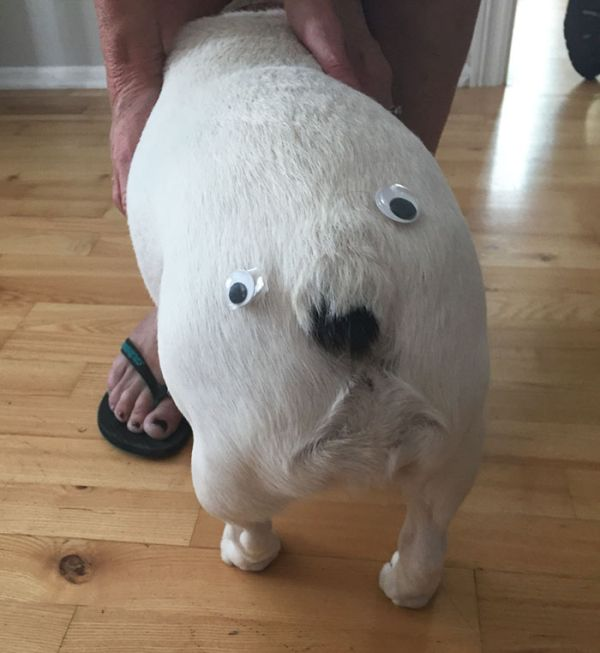 Pics That Prove Googly Eyes Make Everything Funnier (38 pics)