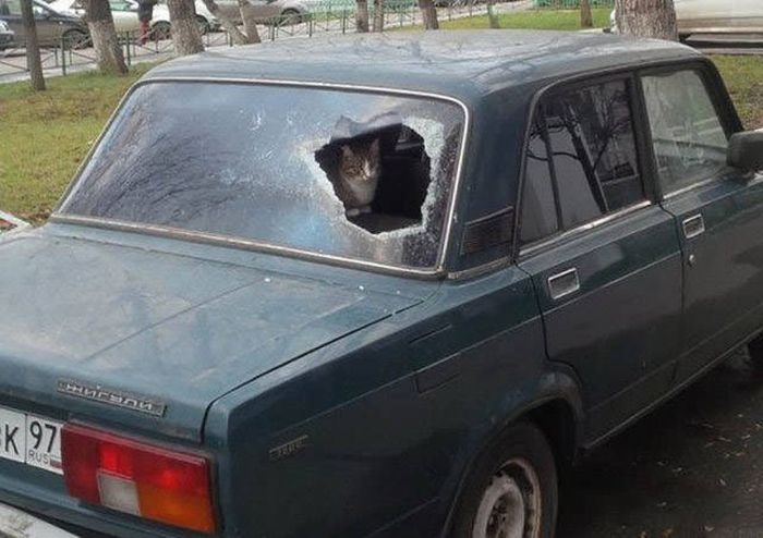 People Will Never Figure Out What Makes Russians Do This Stuff (41 pics)