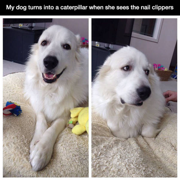 This Is Why We All Love Sweet Puppies (22 pics)