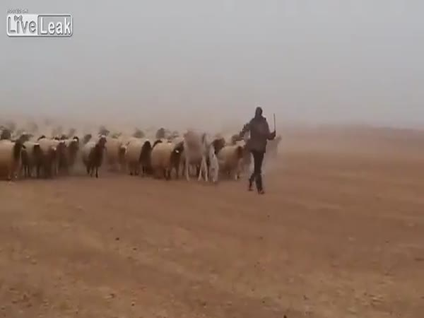 The Herd Marches