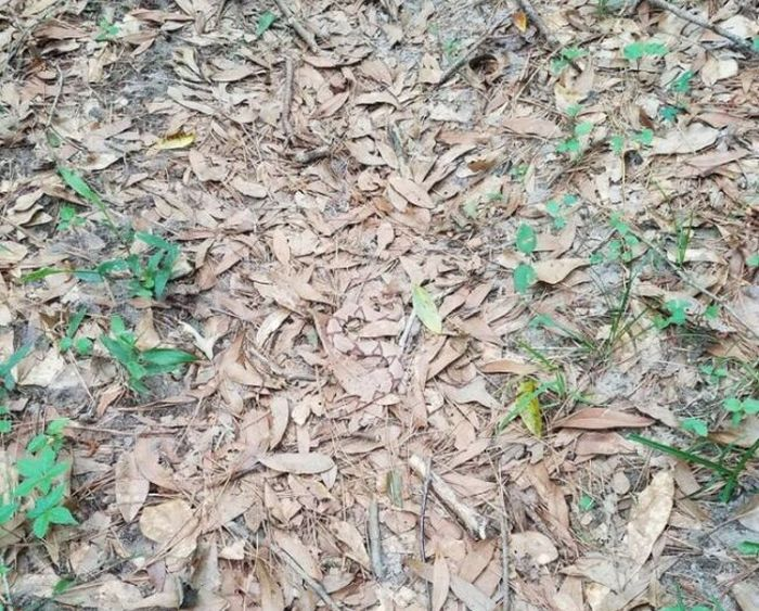 See If You Can Find The Snake (2 pics)