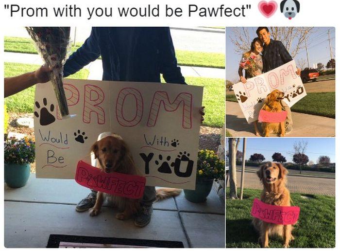 Extraordinary And Impressive Prom Proposals (15 pics)
