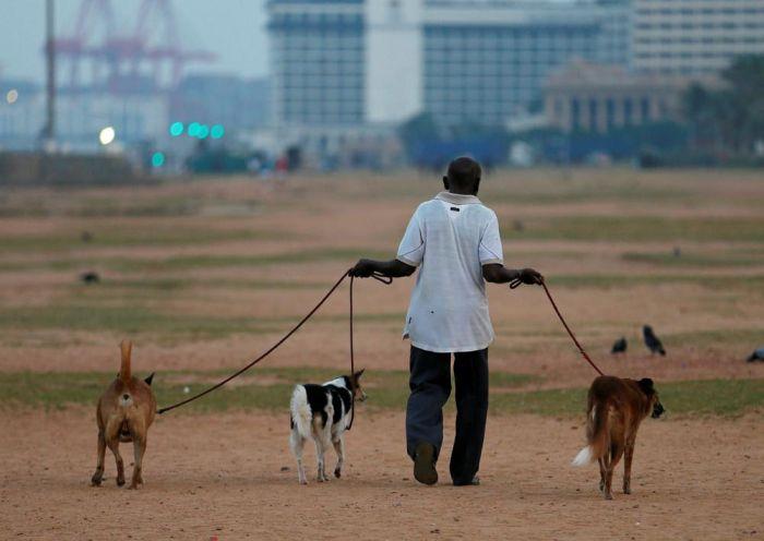 Here's What Everyday Life In Sri Lanka Looks Like (25 pics)