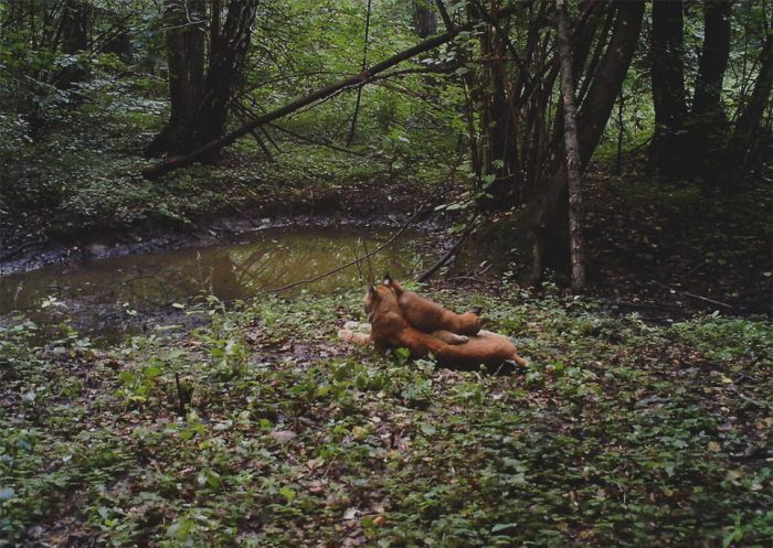 Life In The Chernobyl Dead Zone (16 pics)