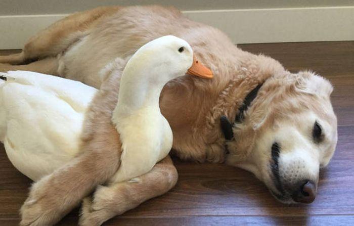 The Animal Kingdom Is Full Of Unusual Friendships (10 pics)