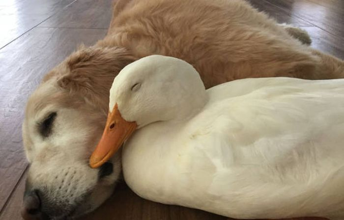 The Animal Kingdom Is Full Of Unusual Friendships (10 pics)