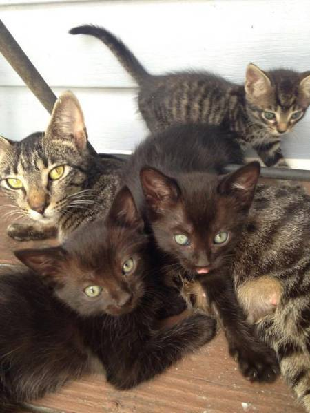 Mama Cat Shows Off Her Kittens After Father And Son Feed Her (8 pics)