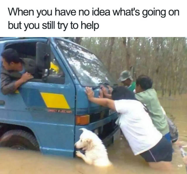 Dogs Bring You The Funniest And Furriest Memes (45 pics)