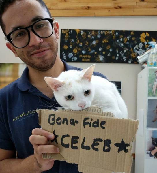 Shelter Helps Boost Cats Chances Of Being Adopted (8 pics)