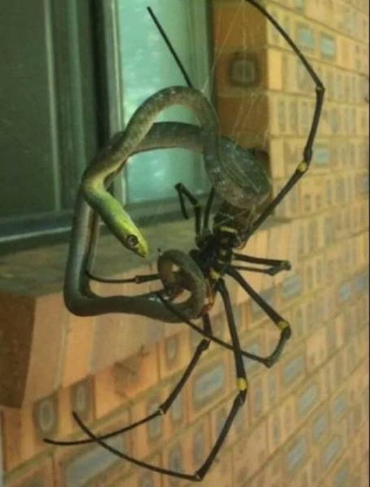 There's So Much Nope In Here It's Painful (35 pics)