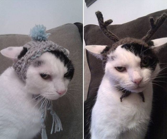 Please Save Me From My Stupid Human (36 pics)