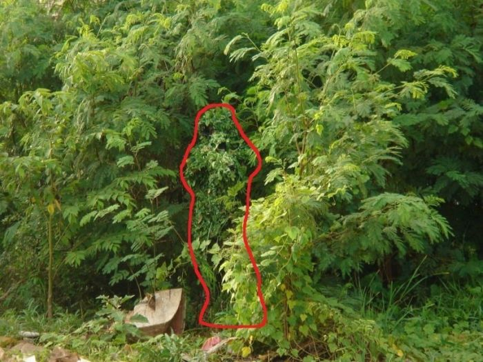 See If You Can Find The Sniper (2 pics)