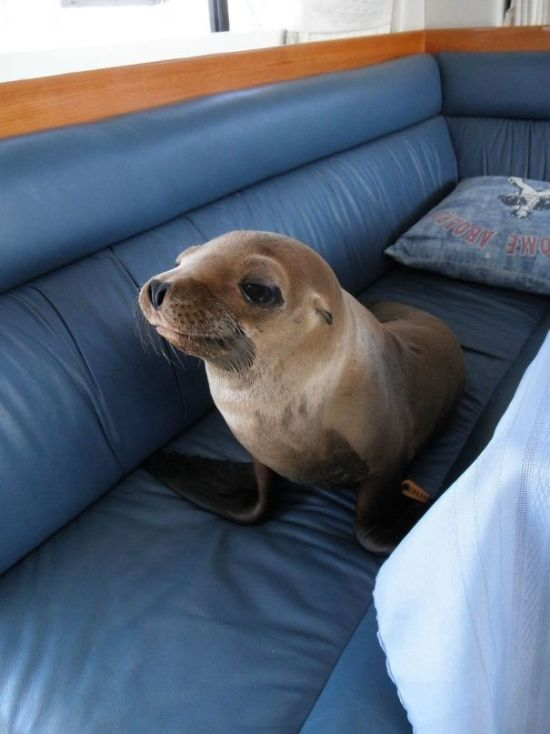 Animals Who Melted The Hearts Of Everyone (40 pics)