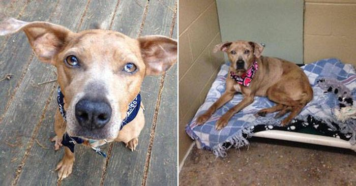 The Difference Between Animals Before And After Adoption Is Priceless (33 pics)