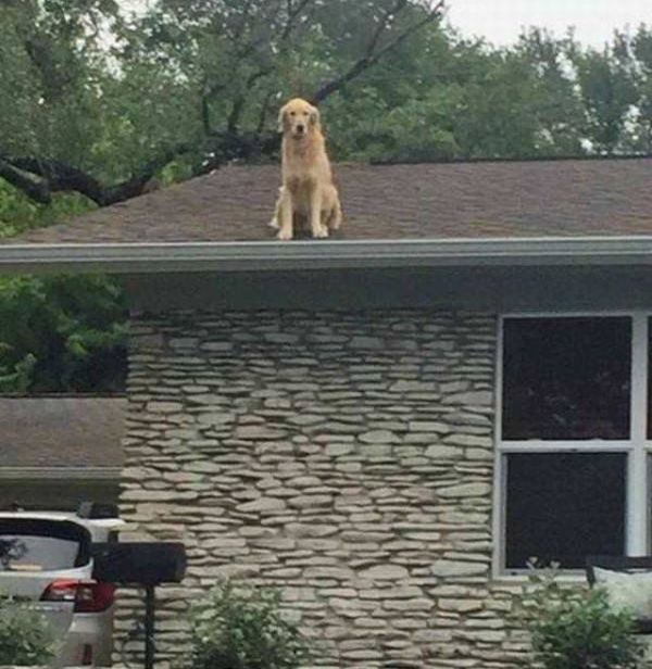 Don't Be Alarmed By The Dog On The Roof (2 pics)