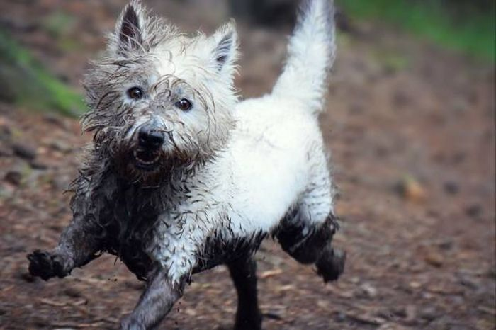 Why Dogs Should Never Go Near Mud (32 pics)