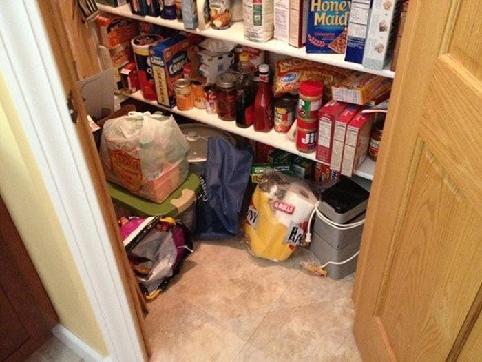 Find The Hidden Cats In These Photos (21 pics)