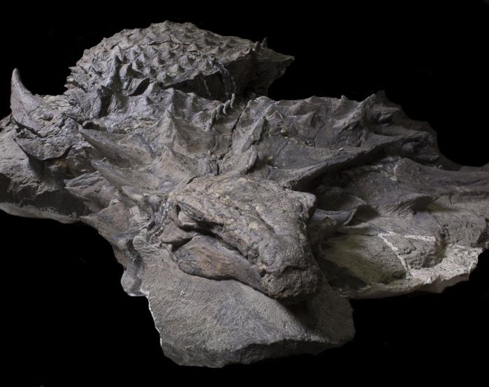 Lifelike Dinosaur Fossil Finally Makes Its Public Debut (6 pics)