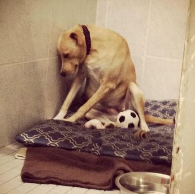 Saddest Dog In The World Could Be Put Down Soon (6 pics)