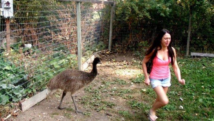 When Animals Face Off Against Women Animals Always Win (22 pics)