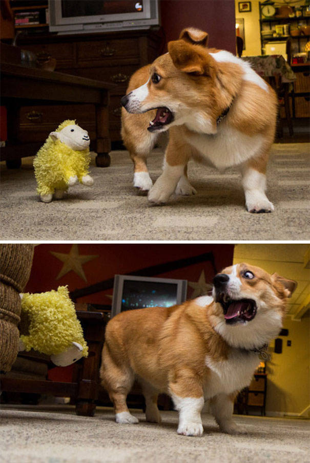 Dogs Seem To Be Afraid Of Generally Everything (40 pics)