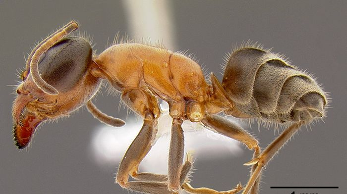 Some People Eat The Eggs Of Mexican Ants (10 pics)