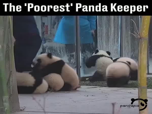 Life's Hard Being A Panda Keeper