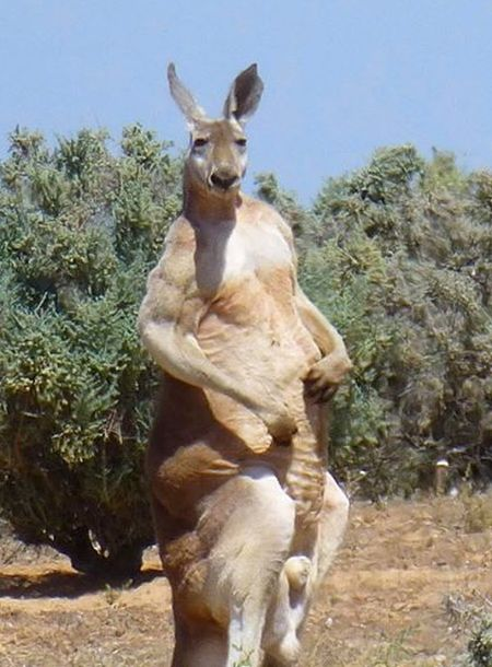 Australian Animals That Took Things Way Too Far (16 pics)