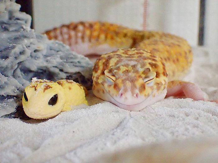 This Gecko Smiling With His Toy Gecko Is Pure Joy (9 pics)