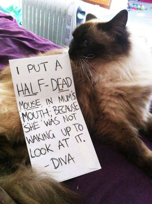 Justice Doesn't Care How Cute Your Pet Is (35 pics)