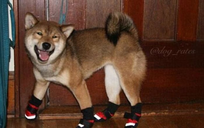 A Collection Of Funny Dogs From Around The World (22 pics)