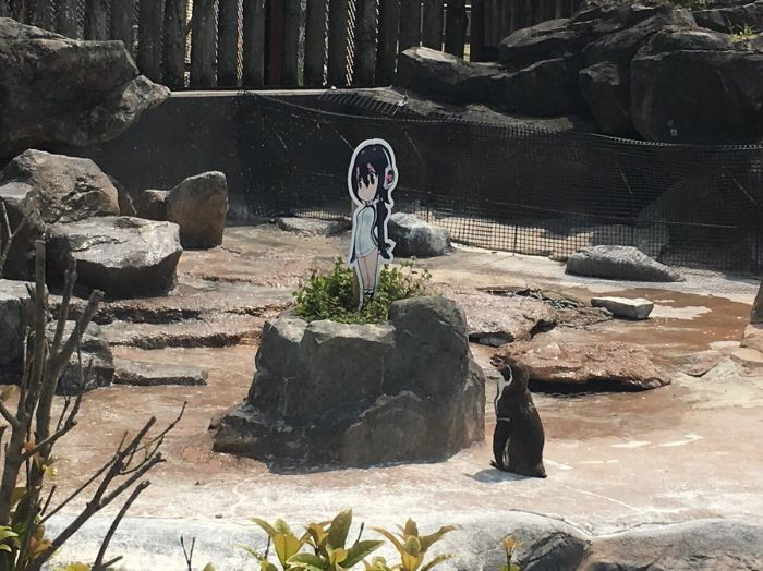 Penguin Falls In Love With An Anime Cutout After Getting Dumped (5 pics)