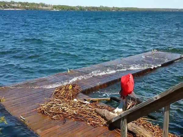 Neighbors Dock Is Mesmerizing In Choppy Water