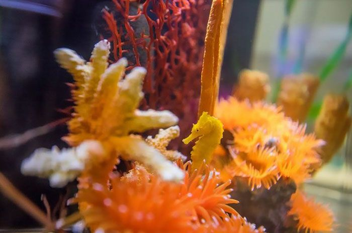 Girl Rescues Seahorse After Mistaking It For A Cheeto (8 pics)