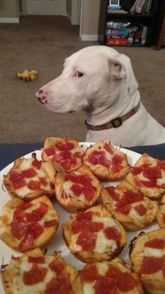 Dogs Are Really Good At Getting Into Trouble (40 pics)