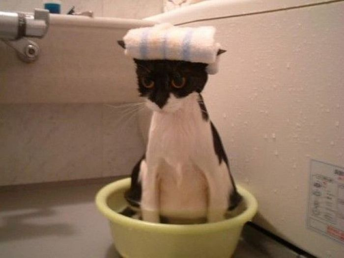 Animals Find Funny Ways To Stay Cool (22 pics)
