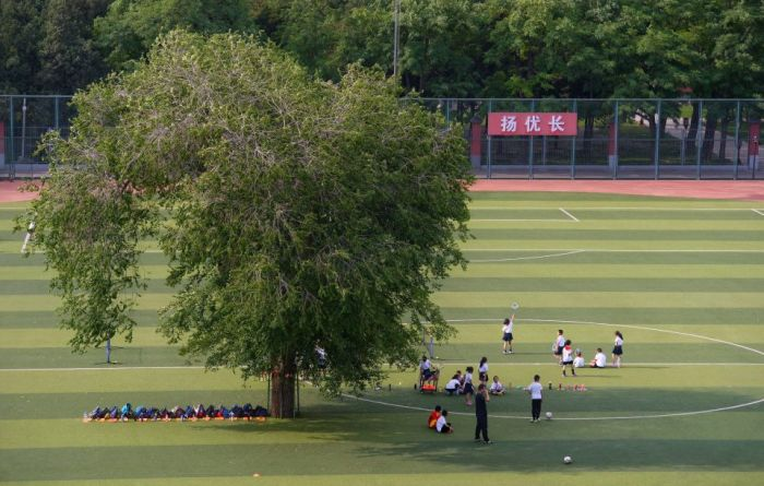 Kids In China Have To Play Football With A Tree On The Field (4 pics)