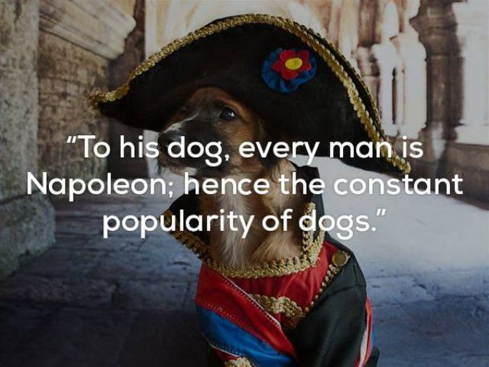 Just In Case You Needed More Proof That Dogs Are Man's Best Friend (25 pics)