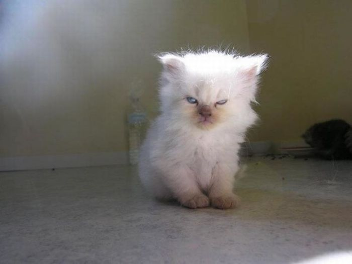 These Angry Kittens Demand To Be Taken Seriously (25 pics)