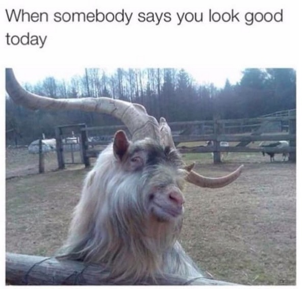 Hilarious And Wonderful Animal Memes That Will Crack You Up (21 pics)