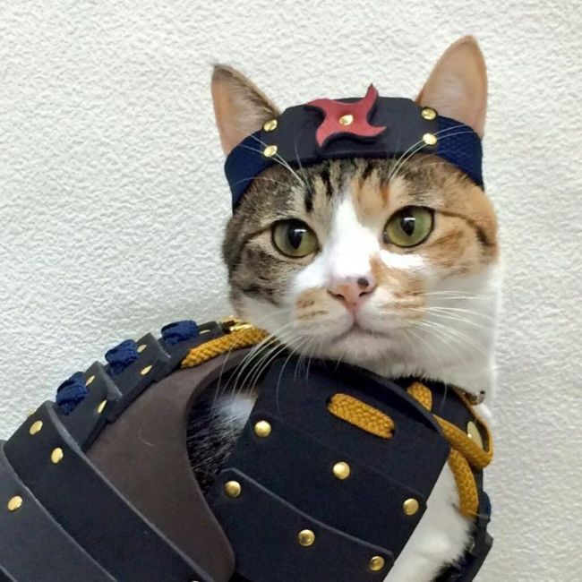 A Company Has Created Samurai Armor For Pets (8 pics)