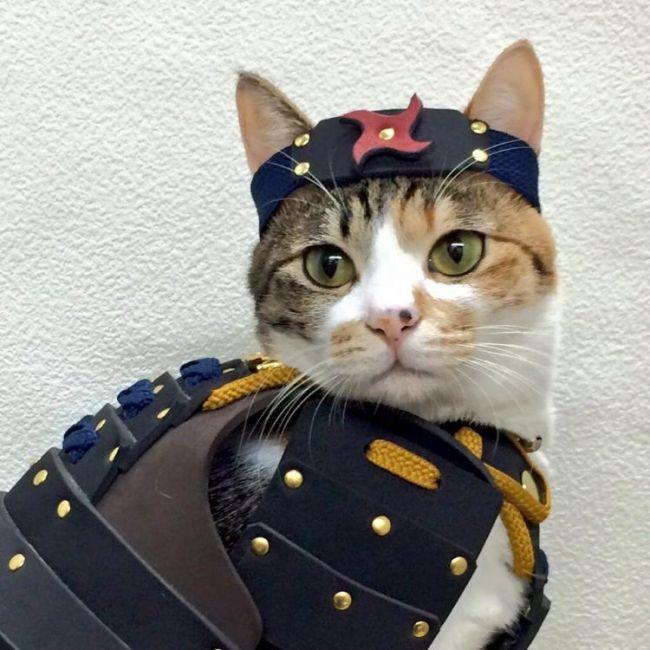 A Company Has Created Samurai Armor For Pets (8 pics)