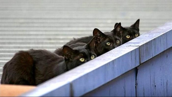 Cats On The Hunt (20 pics)