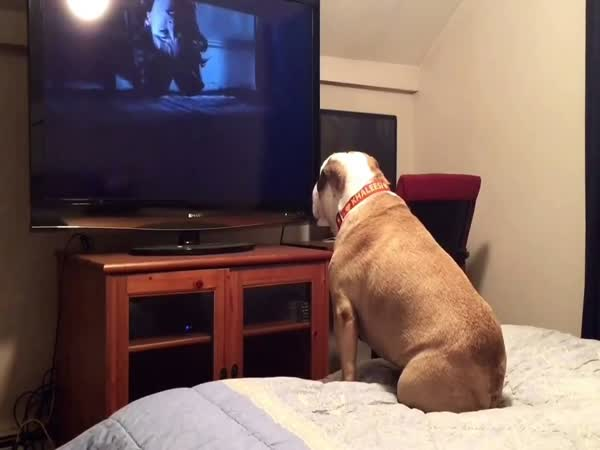 Bulldog Watching Horror Movie Does The Most Unbelievable Thing During A Scary Scene